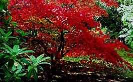 schnellwachsende bäume brennholz